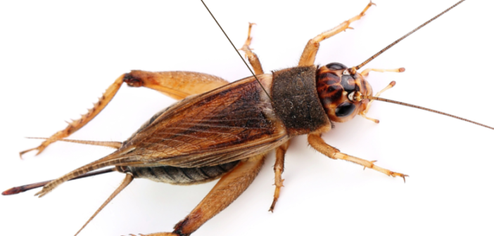 شركة مكافحة حشرات بالرياض